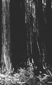 California Eureka Sequoia Park Big Trees