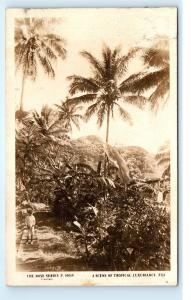 *Rose Series Tropical Fiji Island Boy on Steps Palms Vintage Photo Postcard C40