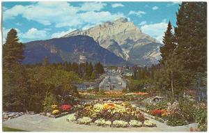 Canadian Rockies, Alpine Gardens, Banff Avenue and Cascade Mt. unused Postcard