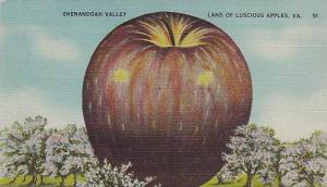 Shenandoah Valley, Land of Luscious Apples, Virginia, 30-40s