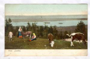 Maidens caring for calves overlooking lake, Orsa, Sweden, 00-10s