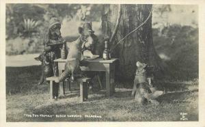 Busch Gardens C-1920s Fox Family Pasadena California RPPC real photo 10727