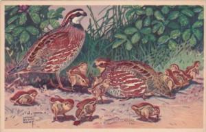 BIrds Bob White Quail by National Wildlife Publishing 1939
