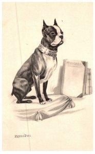 Dog , Boston Bull Terrier