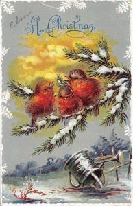 Christmas~Fat Birds Chat on Snowy Pine Branch~Watering Can~Embossed~1908 Germany