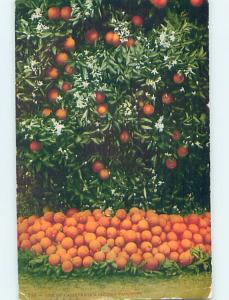 Divided-Back ORANGE TREES Postmarked Sacramento California CA HJ7201