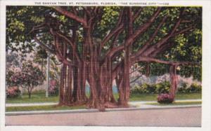 Florida St Petersburg The Famous Banyan Tree