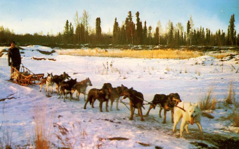 AK - Alaskan Sled Dog Team
