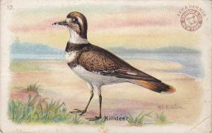 Arm & Hammer Trade Card - Killdeer - Useful Birds 1915