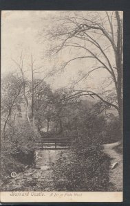 Co Durham Postcard - Barnard Castle, A Bit in Flats Wood    RS11022
