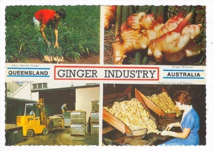 Ginger Industry, Queensland , Australia, 1970-80s