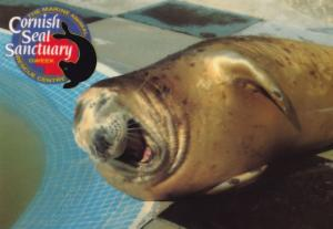 Young Baby Seal Giggling Full Of Fish Cornish Cornwall Sanctuary Postcard
