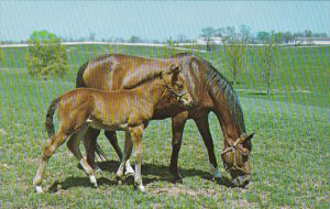 Horses Proud Mare With Her Colt