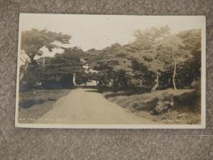 RPPC, On the 14 Mile Drive, Delmonte, Calif., used vintage card