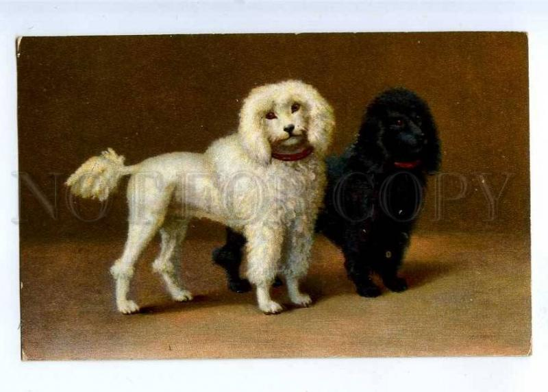 189532 Circus Dogs Black White Poodle Vintage Colorful Pc