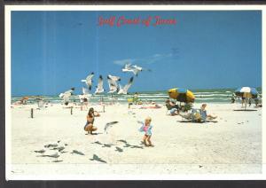 Seagulls,Beach Scene,Padre Ialand,TX BIN