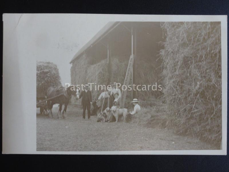 Farming GATHERING THE HAY - HAY CART & BARN c1914 Old RP Postcard