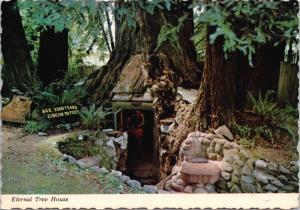 Eternal Tree House Redcrest CA California Redwood Trees Vintage Postcard D51