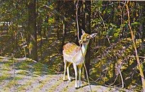 Deer Gobblers Knob Zoo Farm Bloomingdale Indiana