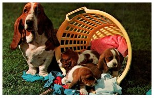 Dog ,   playing in laundry basket