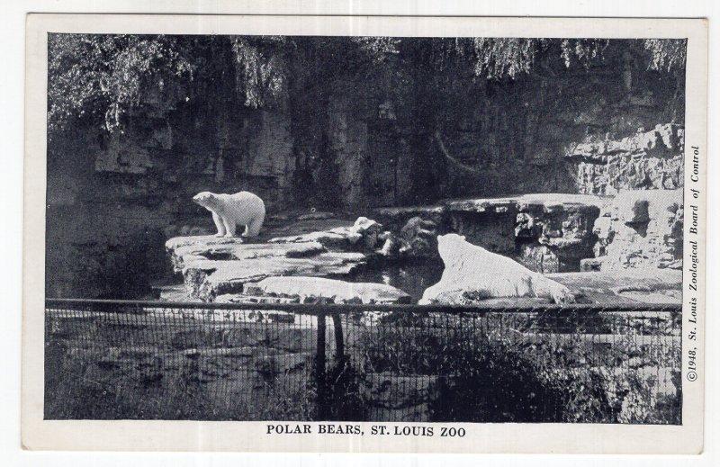 Polar Bears, St. Louis Zoo