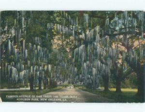 Unused Divided-Back AVENUE OF OAK TREES AT AUDUBON PARK New Orleans LA c8195