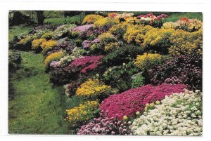Greetings from Pocono Mts PA Rock Garden Vintage A B Wyckoff Postcard