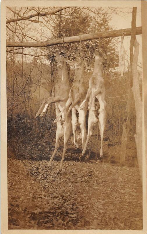 F25/ Interesting RPPC Photo Postcard c1910 Deer Hunting Hanging Bucks 20