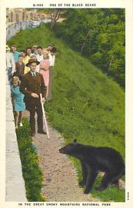 Linen of Black Bear in Great Smoky Mountains National Park