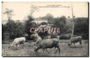 Old Postcard Folklore Correze the pasture Cows