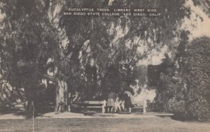 SAN DIEGO, CA, 20-30s; Eucalyptus Trees, Library, West Side,  State College