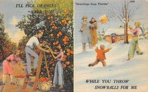 Pick Oranges Florida, USA Fruit Assorted 1949