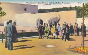 Elephants Fleiushhacker's Zoo Golden Gate Park San Francisco California