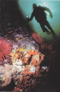 Destination: Diving, Nanaimo, British Columbia, Canada, 50´s-70´s