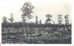 Malaya, Malaysia Young Rubber Plantation  Real Photo