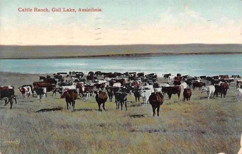 Canada SK Assiniboia Gull Lake Cattle Ranch, Souvenir (Saskatchewan) 1910