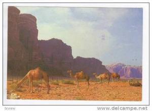 Camel in Dead Sea Area, Israel, PU-1978