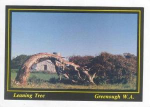 Leaning Tree, Greenough W.A., 70-80s