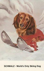 Dachshund SCHMALZ, World's Only Skiing Dog, 1976