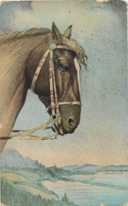 Horse early postcard