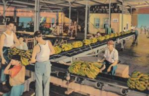 Louisiana New Orleans Unloading Bananas From Ship Side