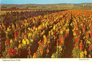 Flower Fields - California