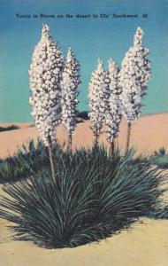 Yucca Flower in Bloom - Common Southwest Desert Shrub - Linen