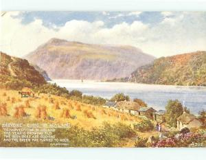 Ireland Harvest time in Ireland Green Gold A592 Village Dundee L Postcard # 6922