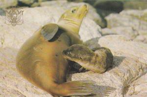 Galapagos Islands , Ecuador , 50-70s ; Sea Lion