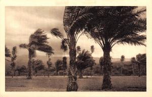 Congo Belge DRC Palmiers dans la Tornade