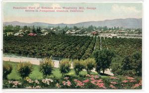 Panorama Orange Groves Glendale California 1910c postcard