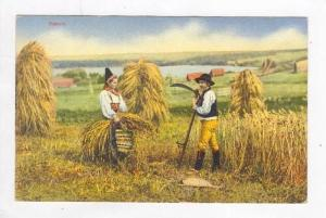 Picking Up Straw In Rättvik (Dalarna), Sweden, 1900-1910s