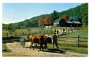 MA - Old Sturbridge Village. Pliny Freeman Farmhouse, Ox Team