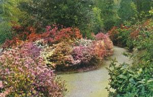 South Carlina Charleston Magnolia Gardens Here The Rev John Grimke Drayton